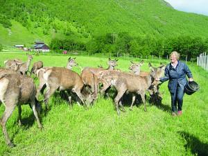 Ragnhild auf der Hirschfarm